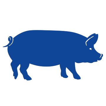 porcino etapa engorde