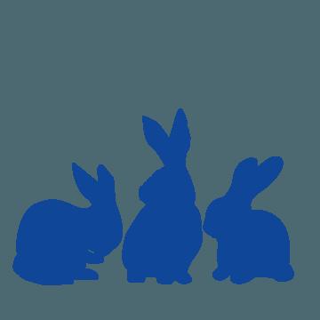 conejos engorde