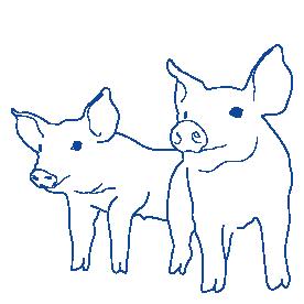 CTIcontrol cerdos